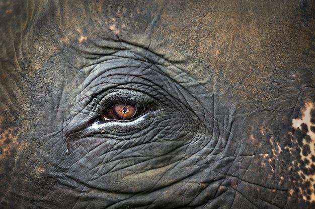 象のカラフルなパターン、目、肌。
