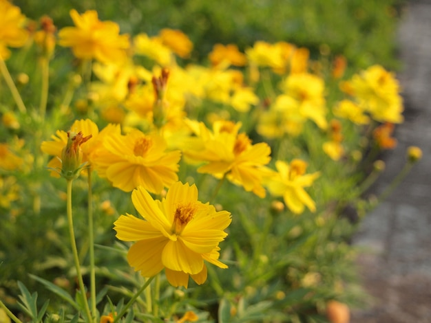 美しい黄色の花と春の背景