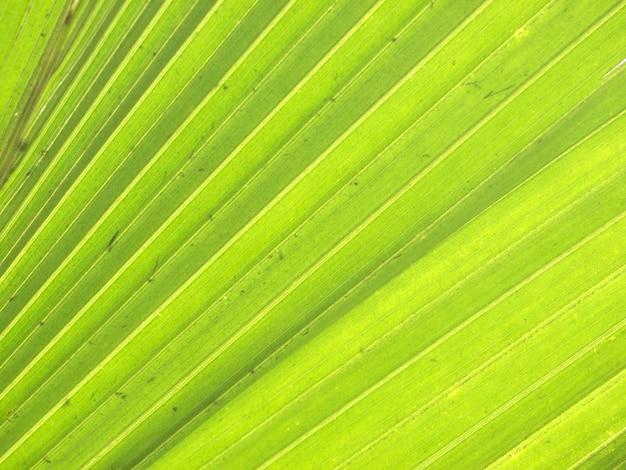 緑のヤシの葉のテクスチャ