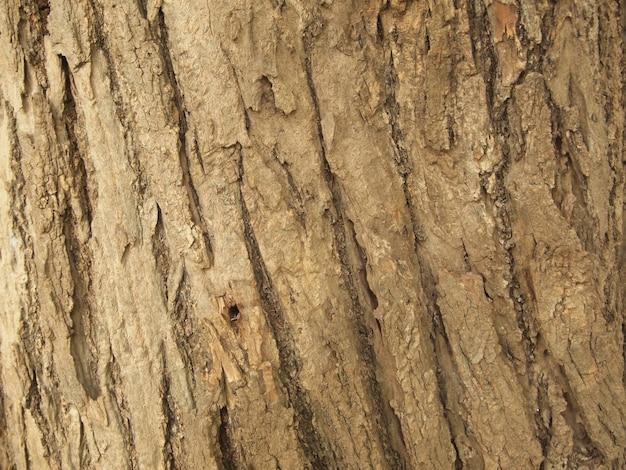 木の樹皮のテクスチャー