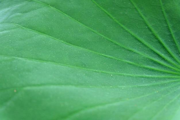 蓮の葉のテクスチャー