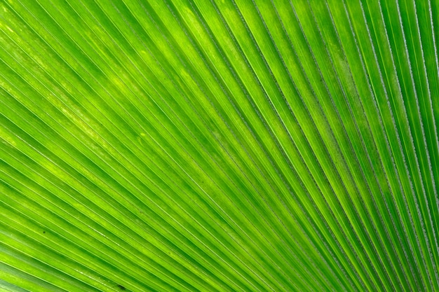 緑のヤシの葉の背景のテクスチャ