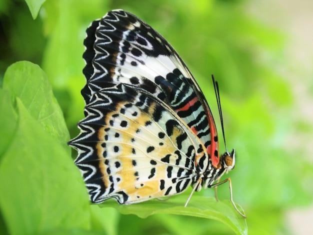 黄色の蝶が朝の自然の中で飛ぶ