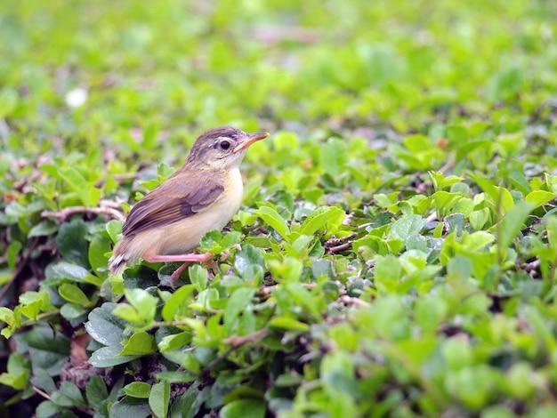 Крупным планом вид милая птичка