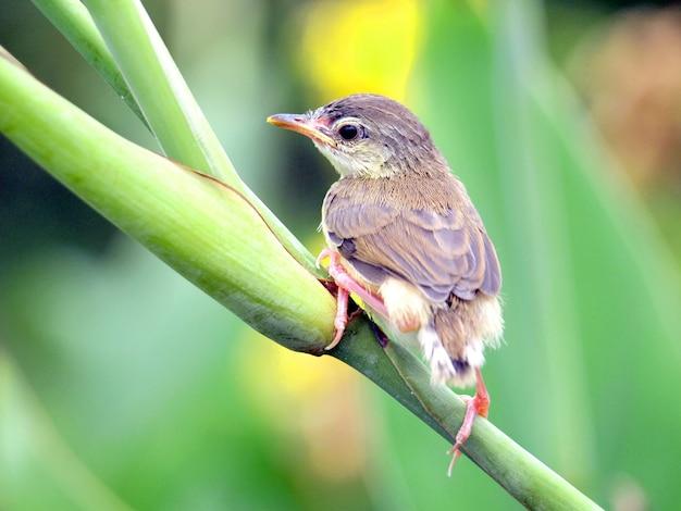 素敵な小鳥のビューを閉じる