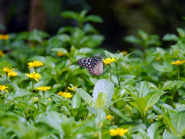 朝の自然の中で青い蝶飛ぶ