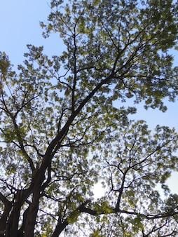 Силуэт дерева