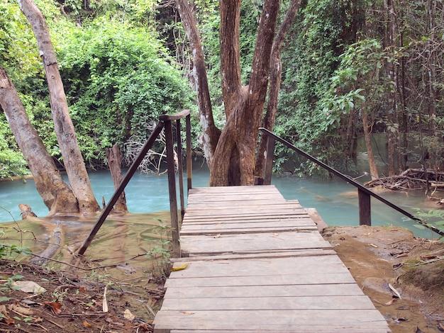 ジャングルの中で木製の橋