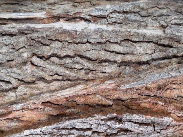 エルムの樹皮。シームレスなタイルテクスチャ