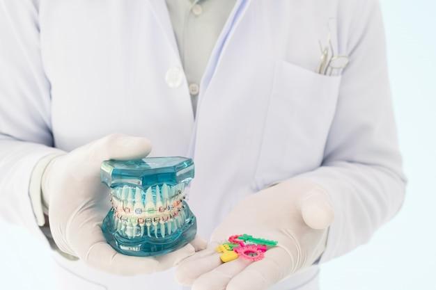 歯列矯正モデルと歯科医ツール - デモンストレーション歯モデル