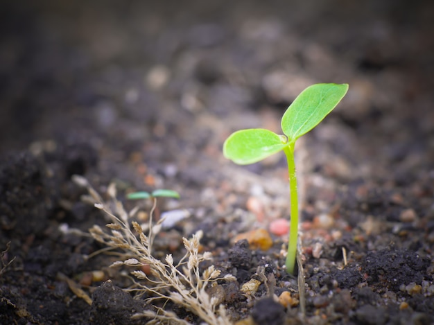 Молодой лист травы с макро зрения