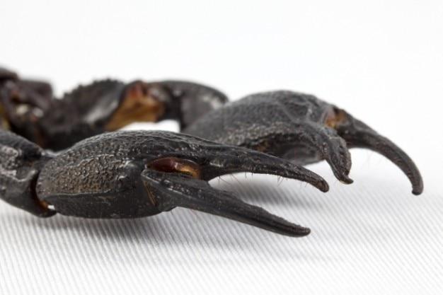 黒サソリ爪