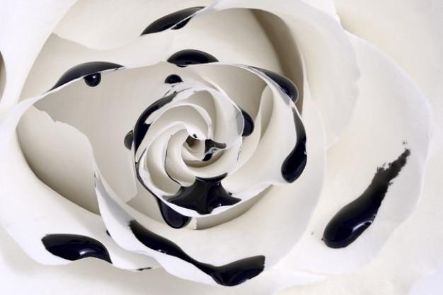 バラのマクロを油滴