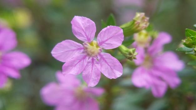 Фиолетовая цветочная макро фотография