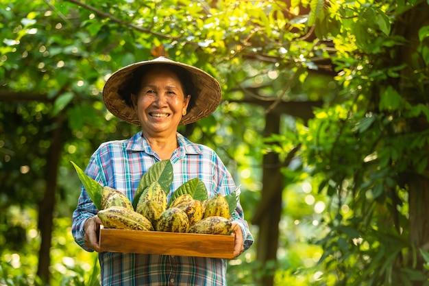Азиатский фермер женщина держит фрукты какао в ящик с счастливой улыбкой.