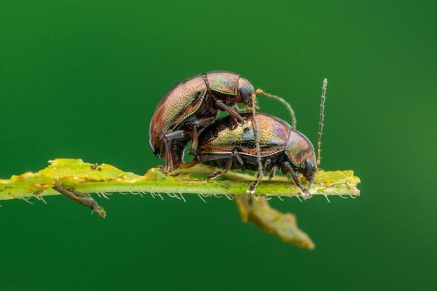 Макро природы жука