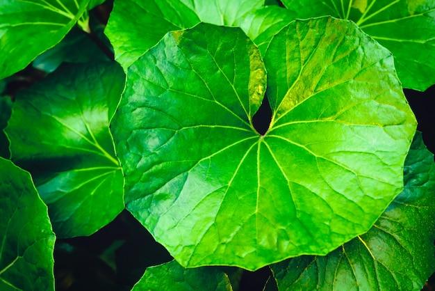 Тропический зеленый фон с зелеными листьями