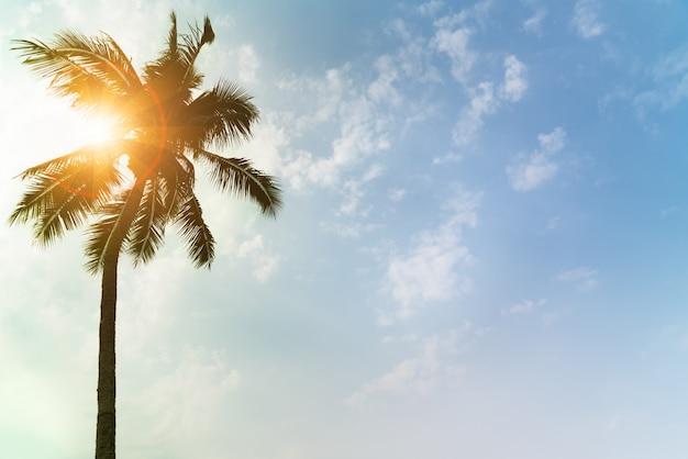 休日正午の光に澄んだ空の上のココナッツの木の読み込み