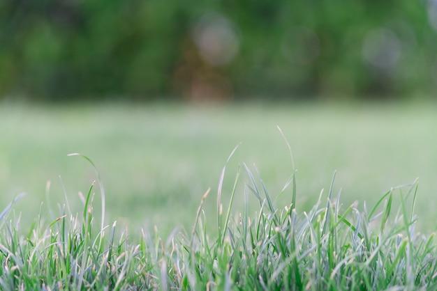 緑色の草地ソフトフォーカスと緑色の芝生を閉じます。地球の日のコンセプト。