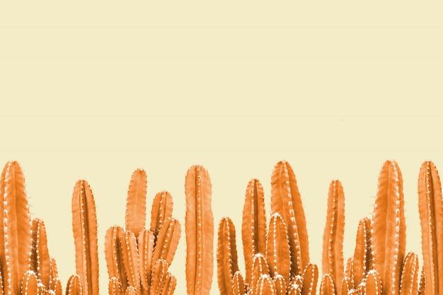 黄色の背景にオレンジ色のサボテン