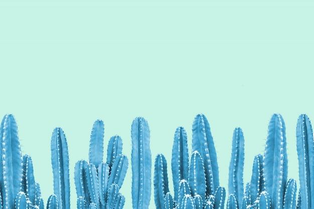ターコイズブルーの背景に青いサボテン