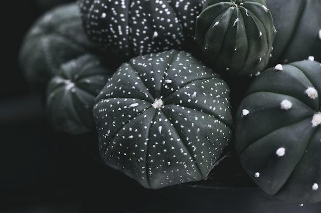 鉢植えのサボテン植物のクローズアップ