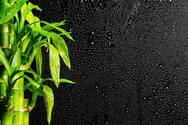 黒い雨滴の背景に幸運な竹の枝