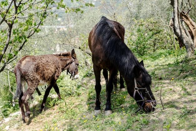 ロバと馬、農村風景