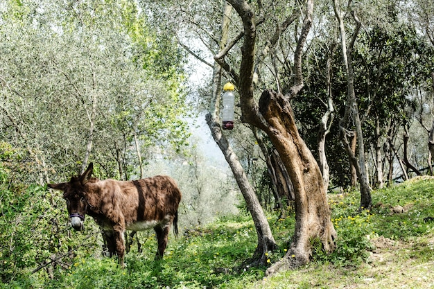 田舎の牧歌的な背景のロバ