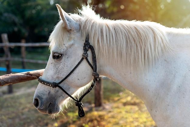 美しいサラブレッド馬