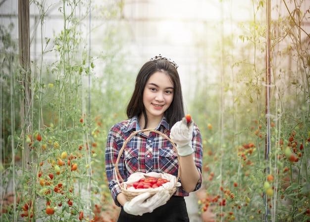 Азиатская женщина собирает помидоры