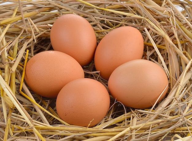 Свежие яйца на рисовой соломе.
