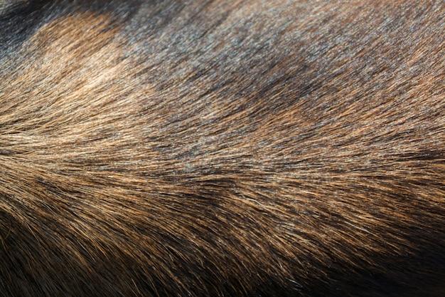 犬の毛皮の質感、ヘアドッグ