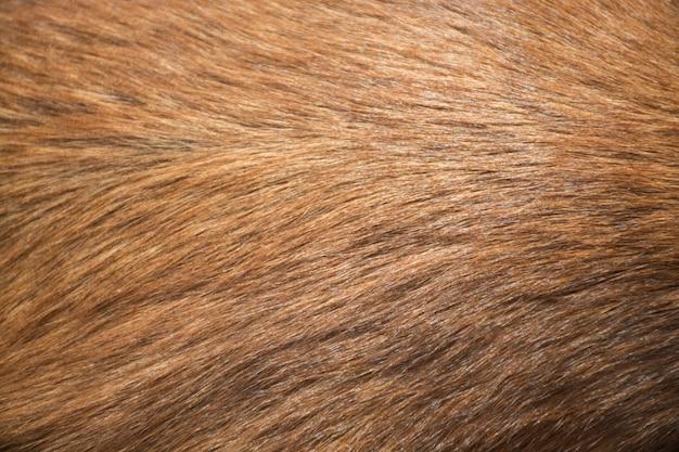 犬の毛皮の質感
