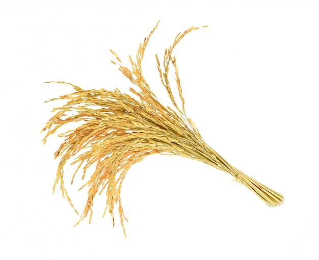 白い背景の上の米の耳