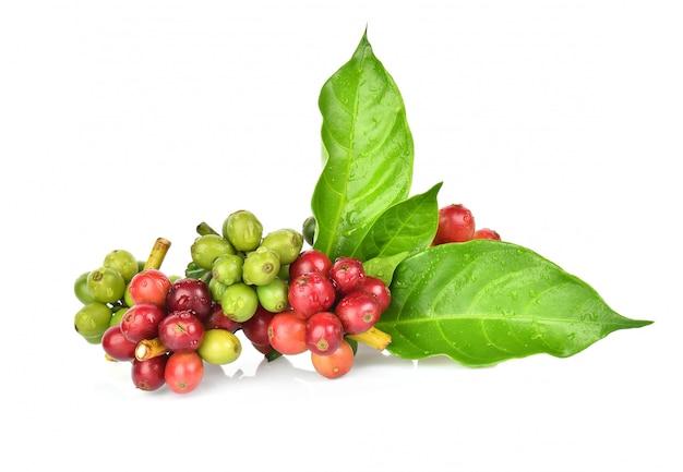 新鮮なコーヒー豆の白い背景で隔離