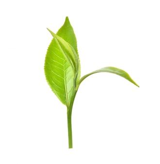 Лист зеленого чая на белом фоне