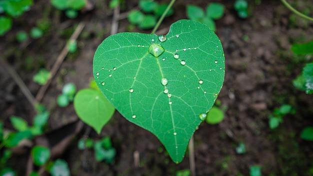 Капли воды на зеленом листе