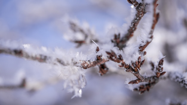 Снег покрыл ветви деревьев