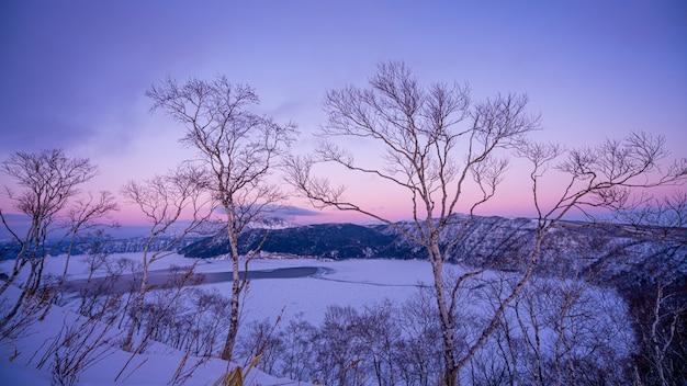 Голое дерево зимой