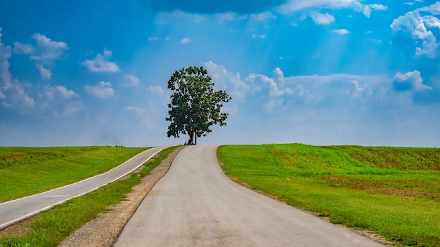 Зеленое дерево пейзаж