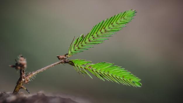 Зеленая ветвь дерева