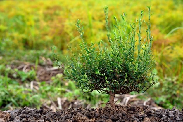 緑の背景に土壌で成長する若い植物