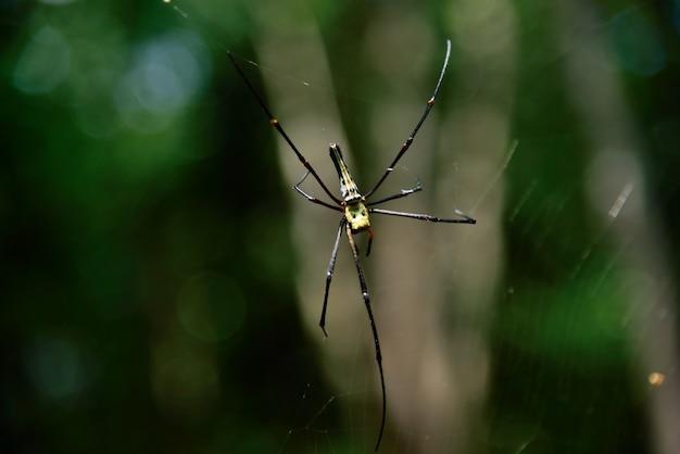緑色の背景に自然の黄色のクモ