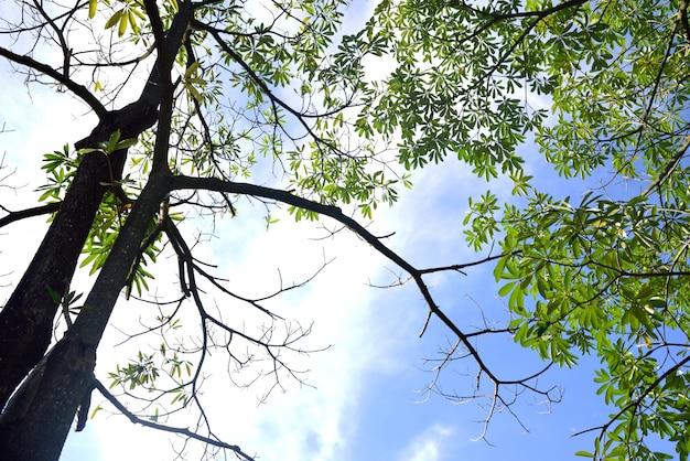 青い空の背景に木の枝