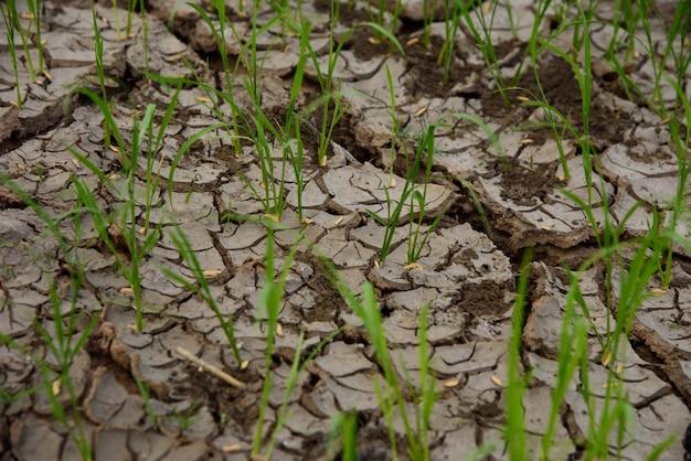土壌破砕テクスチャと背景