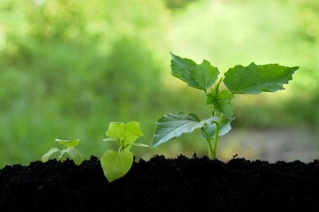 若い植物は緑の自然の背景にステップで成長しています。