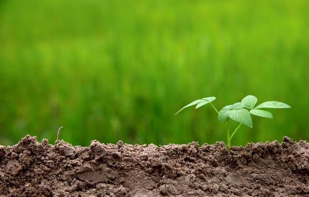 緑色の自然の背景に低い右に置く土壌で成長する若い植物、歩くカタツムリ