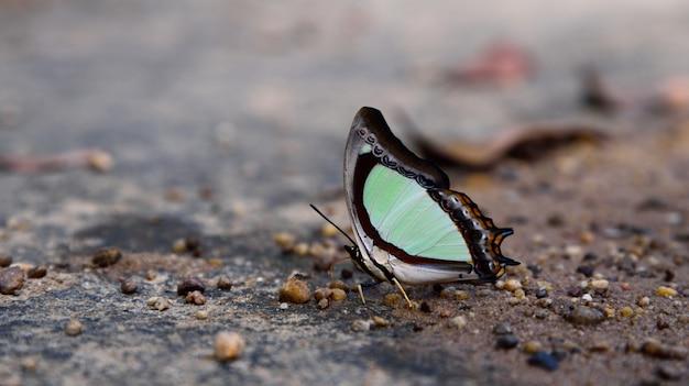 自然の中の土に白い蝶