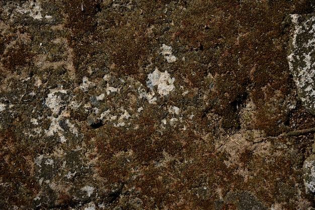 セメントのコケ壁